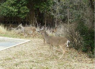 Texas wildlife 51.6k
